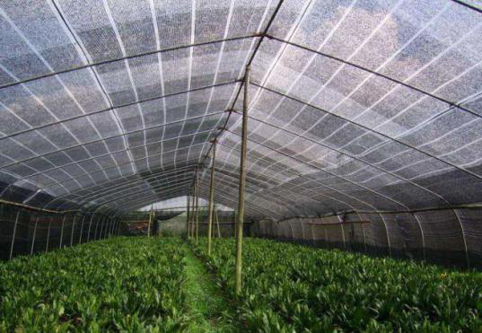 遮阳网,露地遮阳网,广州市邦爵建筑材料贸易有限公司